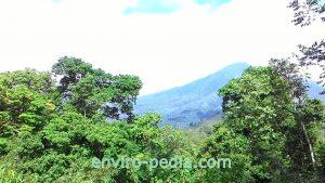 hutan di Bondowoso