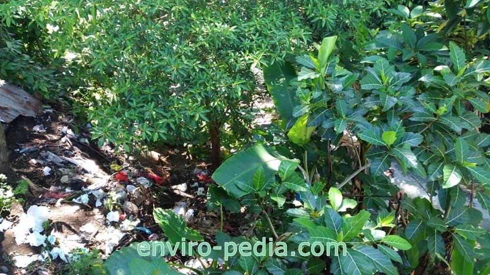 Sampah dibuang sembarangan di sungai