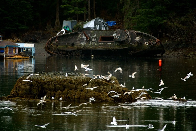 Tumpahan minyak mentah di laut memberi dampak buruk pada hewan laut dan burung